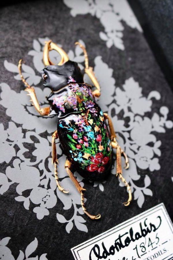 Peinture sur insecte - Amuz Lille